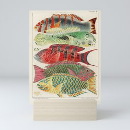 Great Barrier Reef Fishes from The Great Barrier Reef of Australia (1893) by William Saville-Kent (1845-1908) Mini Art Print