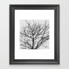 Undetermined  Framed Art Print