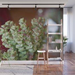 Fat Plants Thorns Cactus Wall Mural
