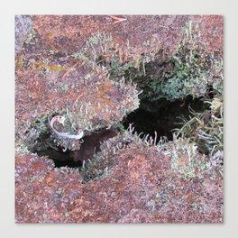 Mousse et lichen Canvas Print