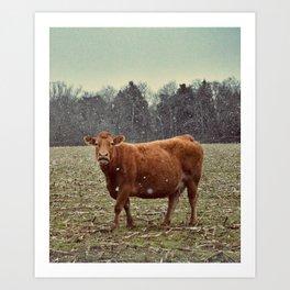 cow lick Art Print