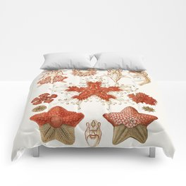 Starfish Vintage Illustration Comforters
