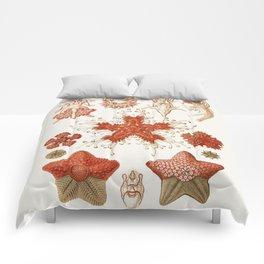 Starfish Vintage Illustration Comforters