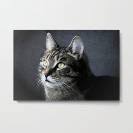 Cat looking out Metal Print