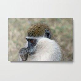 Wild Cute Vervet Monkey Portrait Metal Print