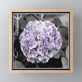Flower | Flowers | BNW Purple Hydrangea Framed Mini Art Print