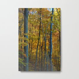 The Forrest in Autumn Metal Print