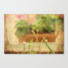 Anarchy in Planter Canvas Print