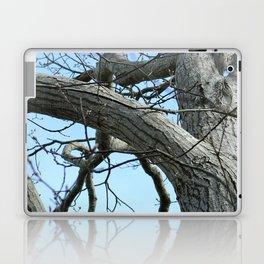 Winter Tree in Beverly, MA Laptop & iPad Skin