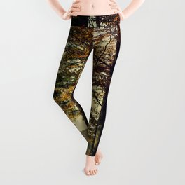 Forest in the colors of autumn. Leggings