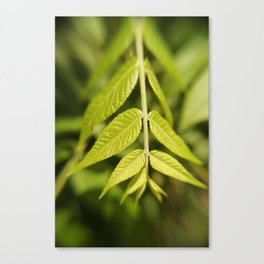 Leafy Down Canvas Print