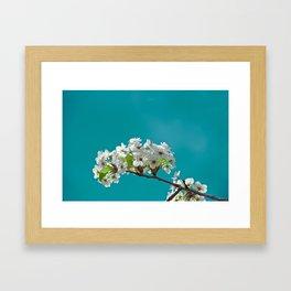 Spring Blossoms - IIIa Framed Art Print
