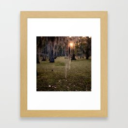Witch's Hair at Sunrise on the Swamp Framed Art Print