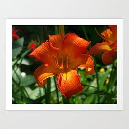 Fiery Daylily Flower - Hemerocallis 'Coleman Hawkins' Art Print
