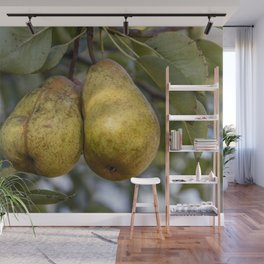 Ripe Pears on the tree Wall Mural