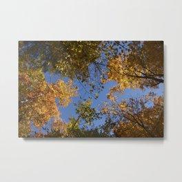 trees in the air Metal Print