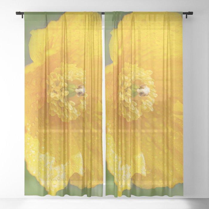 Orange Garden Flora Sheer Curtain