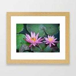 pink waterlily/green bug Framed Art Print