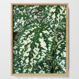 Green and white leafed plant Serving Tray
