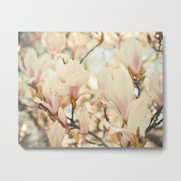 Magnolia and Cream Metal Print