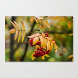 Bright Autumn VII Canvas Print