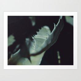 Aloe thorns Art Print