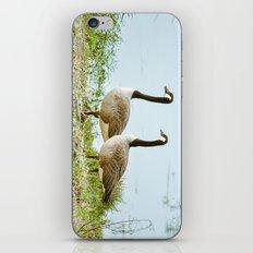 Gazing Geese iPhone & iPod Skin