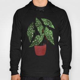 begonia maculata interior plant Hoody