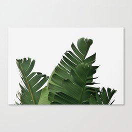 Minimal Banana Leaves Canvas Print
