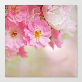 rose1 Canvas Print