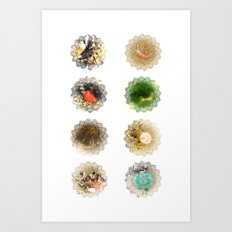 Haystack Rock Tidepool Creatures Art Print