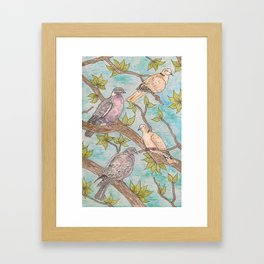 Various Pigeons Framed Art Print