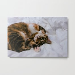 Cat by Anton Lochov Metal Print