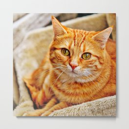 Cute red cat Metal Print