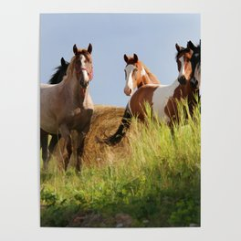 The Wild Bunch-Horses Poster