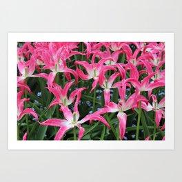 Spent Tulips Art Print