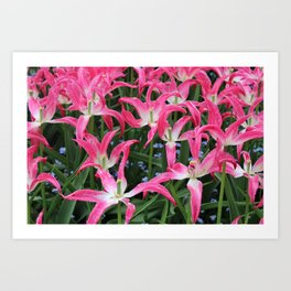 Spent Tulips Art Print