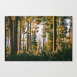 Into the Wild XVI Canvas Print