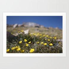 Alpine Avens Art Print