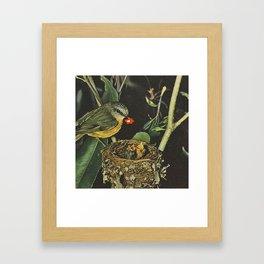 Birdie likes Framed Art Print