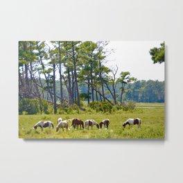 Wild Horses of Chincoteague Metal Print