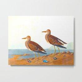 Pectoral Sandpiper Bird Metal Print