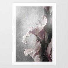 Gladiolus Profile Art Print