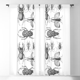 Vintage Beetle black and white drawing Blackout Curtain