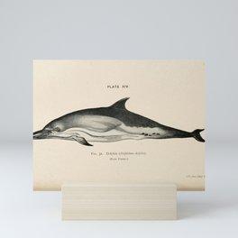 W Sidney Berridge - A Book of Whales (1900) - Figure 32: Short-beaked Common Dolphin Mini Art Print