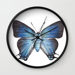 Butterfly - The Great Purple Hairstreak - ATLIDES HALESUS by Magda Opoka Wall Clock