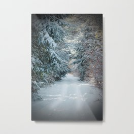 Trail by Evergreens in Winter Metal Print