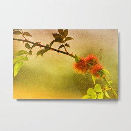 Robin's Pincushion Metal Print
