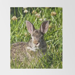 Young Cottontail Rabbit Throw Blanket