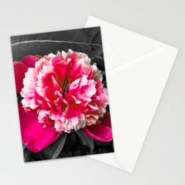 Paeony pink black and white Stationery Cards